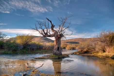 Árbol seco en el Pueblito, Durango, México.